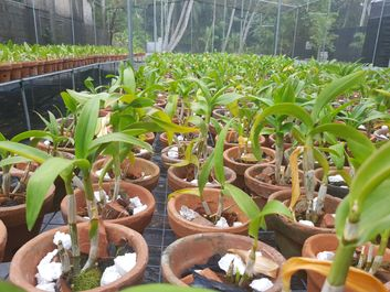 New Orchid Seedlings
