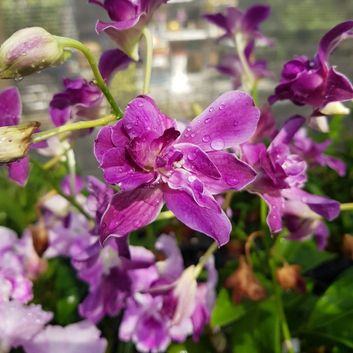 New arrival orchid 1 (2)